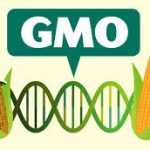Online petition against Namib Mills to stop GMO maize imported  into the country