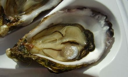 Public warned not to consume poisonous oysters and mussels from Walvis Bay