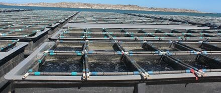 Negative results of Paralytic Shellfish Poisoning in abalone from Luderitz