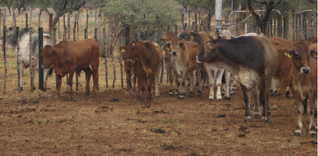 Agric sector calls for emergency livestock marketing support from financing institutions as drought looms