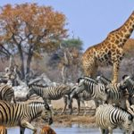 Namibia upsets Japan, New Zealand to secure top travel destination award