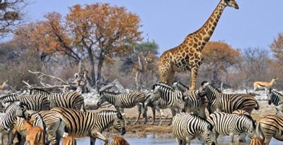 Namibia upsets Japan, New Zealand to secure top travel destination award