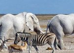 Youth gather in Kamanjab for wildlife conservancy