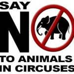 Stop the McLaren Circus from touring Namibia!
