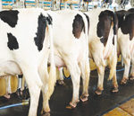 Local dairy industry fighting for survival