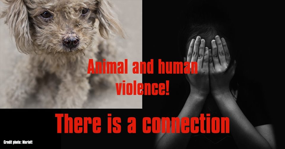 Pilot public talk to unpack the link between animal and human abuse