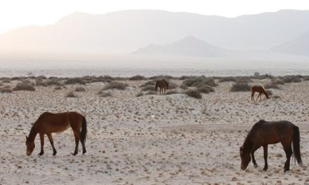 Environment ministry drafts action plan to protect wild horses of the Namib
