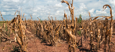 Food security weakening amid drought – report