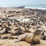 Cabinet announces new allowable seal harvesting quota
