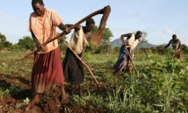 Invest in Africa's food markets to win the war on hunger and boost nutrition – African Development Bank