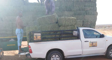 Kunene's farming community gets lifeline – Ehirovipuka Conservancy purchases 353 bales of lucerne