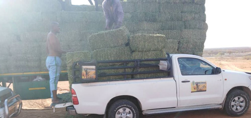 Kunene's farming community gets lifeline – Ehirovipuka Conservancy purchases 353 bales of lucerne