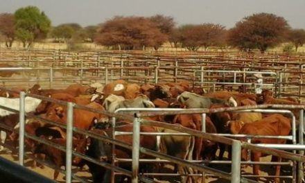 Livestock prices for the remainder of current quarter expected to improve – Meat Board