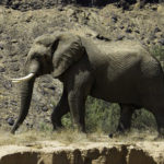 Jumbo claims the life of Austrian tourist in the Kunene Region