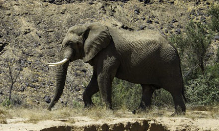 Jumbo claims the life of Austrian tourist in the Kunene Region