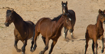 Tourism ministry commits to the protection of feral horses
