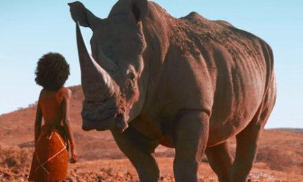 Anti-rhino poaching short film to screen at DHPS next week