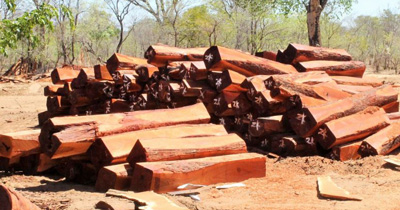 No timber harvested or transported over the holiday period -Ministry