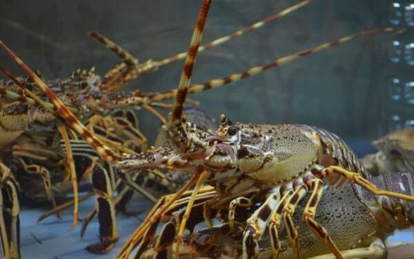 Crayfish festival postponed to 2021 due to COVID-19