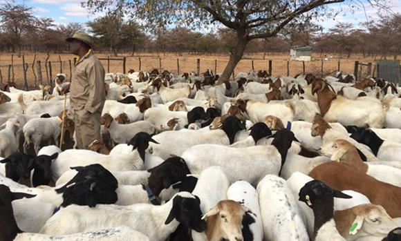 CCF publishes scientific paper on livestock predation in eastern communal areas
