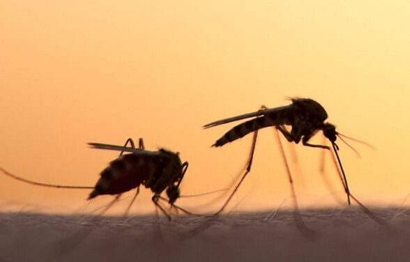 12,507 malaria cases, 40 deaths recorded this year amid the COVID 19 pandemic