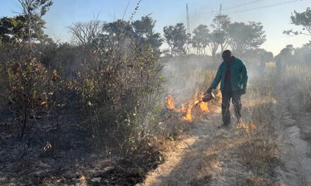 Environment Ministry commences with forest fire management