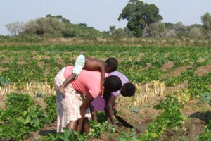 SADC strengthens mechanisms on food security in response to COVID-19