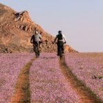 Aus and surroundings turn into kaleidoscope of desert flowers after the rains