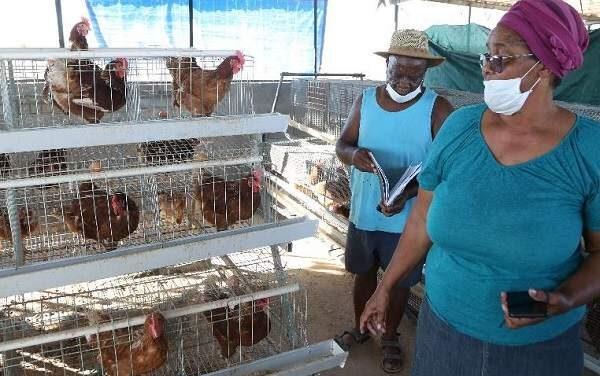 Khorixas farming couple makes inroads in rural poultry market