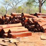 New timber harvesting activities will remain prohibited – Ministry