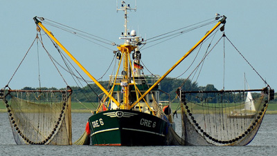 Government fishing quota auction raises N$627 million