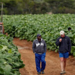 Zimbabwe government's Global Compensation Agreement with two farming organisations raises serious concerns