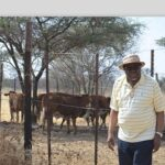 Geingob supports growth at home initiative – Markets 60 cattle to Meatco