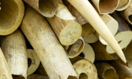 Shifeta irked by foreign interference in Namibia's ivory trade plans