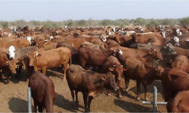 Oshakati Eloolo Abattoir to facilitate the export of NCA cattle and mutton to China