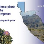 Free e-book field guide unlocks Sperrgebiet's rich plant diversity