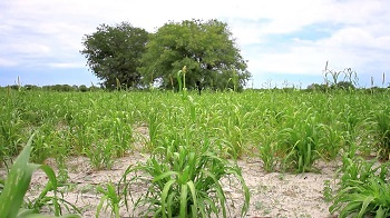 Importance of market research in agribusiness ventures