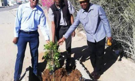 Navachab and Woermann help Karibib plant new trees for a greener environment