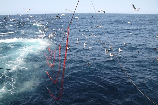 Seabird deaths in the Namibian demersal zone reduced by 98% – report