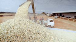 Last year's harvest expected to sustain households till  May – report