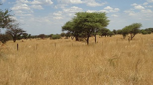 Rewilding helps nature heal – Cheetah Conservation Fund