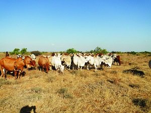 Comparisons of the beef value chain in Namibia, Botswana and Australia