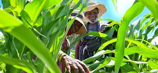 FAO and the AU Commission launch guide to help countries enter Africa's new single market
