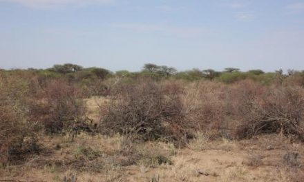 Replacing hard coal in Germany with bush wood from Namibia?