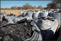 Namibia to export 350 tons of charcoal to the USA