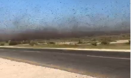 Massive locust swarms invade Ohangwena, Oshana and Omusati