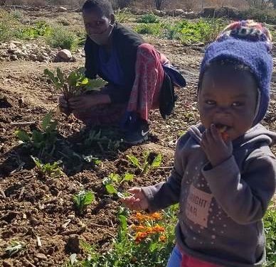 Community gardening initiative handed over to the city fathers