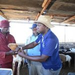 Basic Understanding of livestock licks and feed supplementation