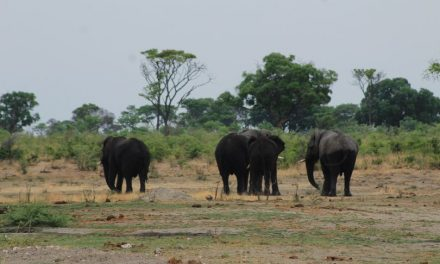 Residents of Katima Mulilo warned of Jumbos in their vicinity