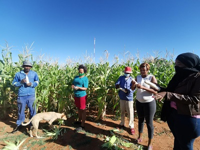 Farming training and mentorship programme ensures that Uitkoms residents become self sufficient